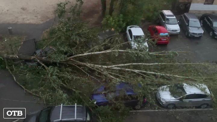 В Екатеринбурге во время ночной грозы упали десятки деревьев