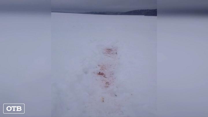 Жители уральской деревни Урмикеево жалуются на нашествие волков