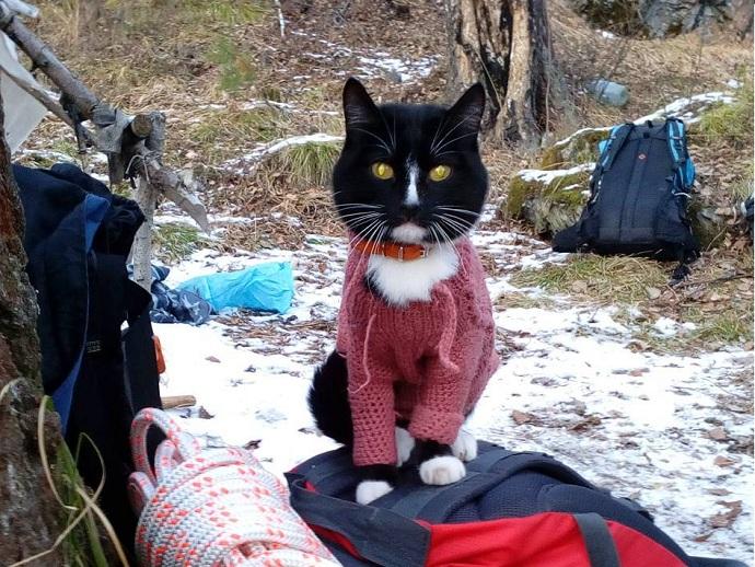 В Российской Федерации определили самого известного котика