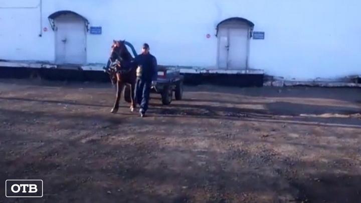 В колонию Краснотурьинска пытались провезти сотовые телефоны на лошади