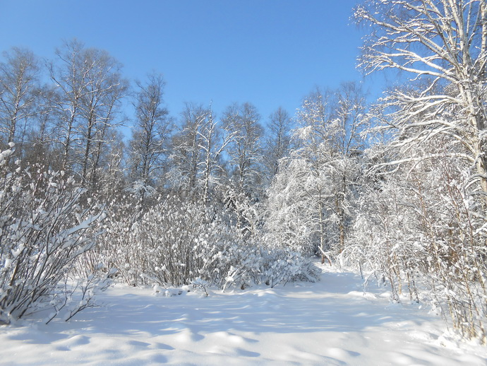 Вгороде Кушве Свердловской области пропали два 11-летних ребенка