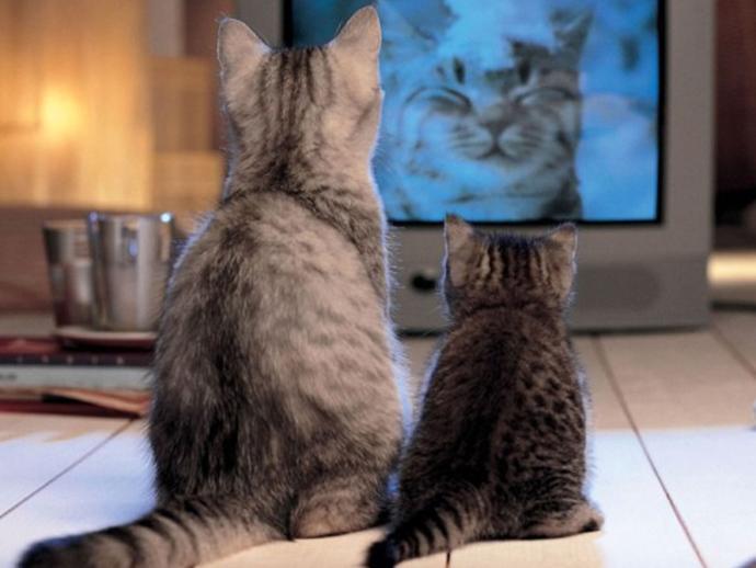 В государственной думе могут запретить показ рекламы поТВ впроцессе фильмов